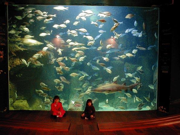 audierne l aquarium encyclop 233 die marikavel des noms de lieux