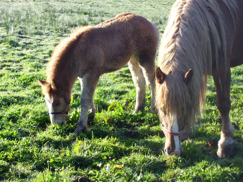 Cheval / Marc'h / Horse Jument-pouliche-130409-c