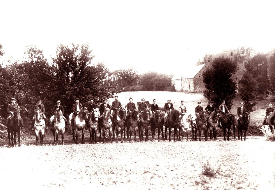 Cheval / Marc'h / Horse Kermataman-chevaux
