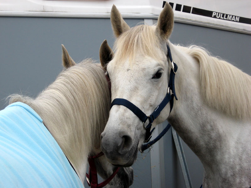 Cheval / Marc'h / Horse Chevaux-tendresse-callac-19